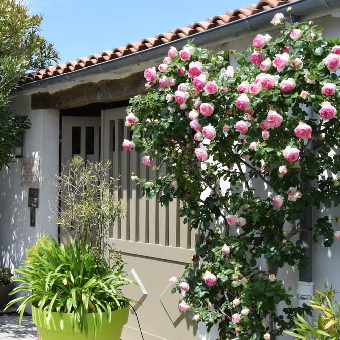 Residence Andrea ile de Re locations saisonnières La Flotte