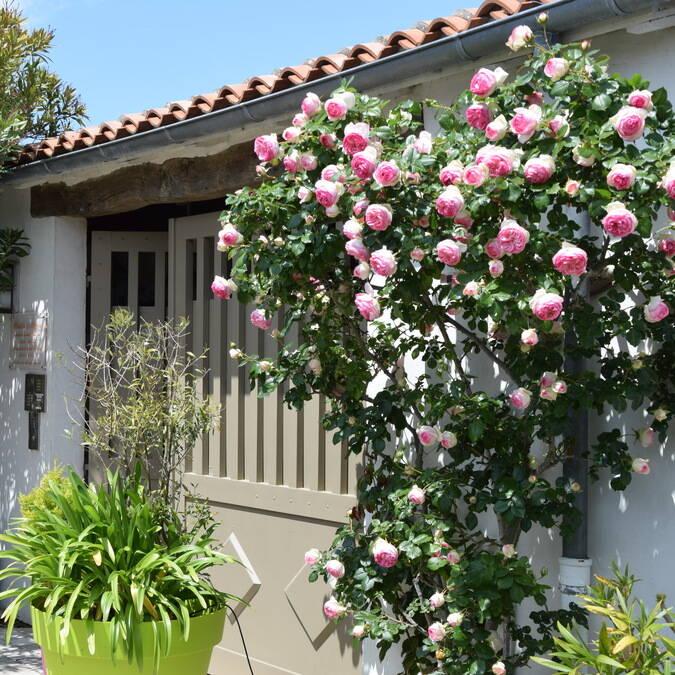 location de meublés saisonniers 2 à 5 personnes ile de ré résidence andrea